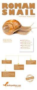 roman_snail_infographic