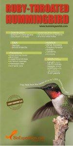ruby_throated_hummingbird_image