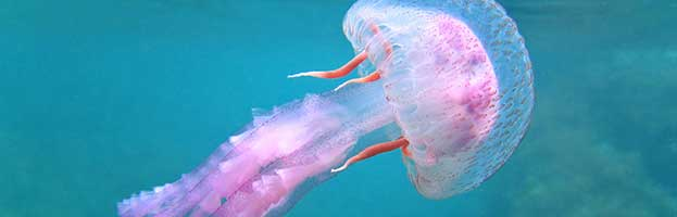 Jellyfish in Popular Culture