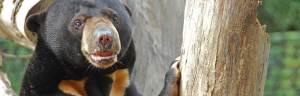 bear_conservation_efforts