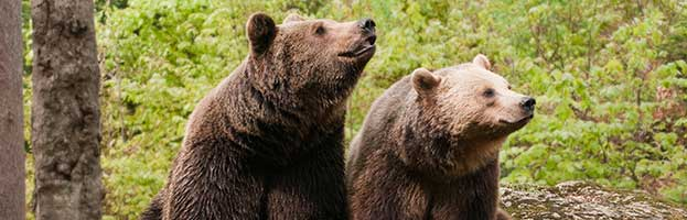 Bears in Popular Culture