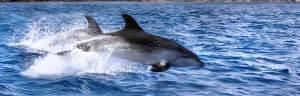 dolphin_evolution