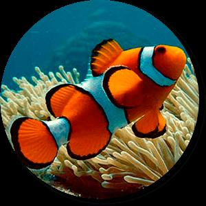 fish_r