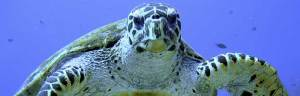 sea_turtle_conservation