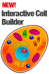 Interactive cell builder