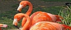 Flamingo-site