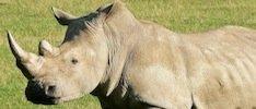 Rhino_minisite