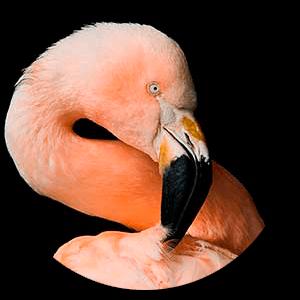 birds_r