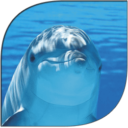 dolphin-site