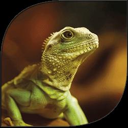lizard-site