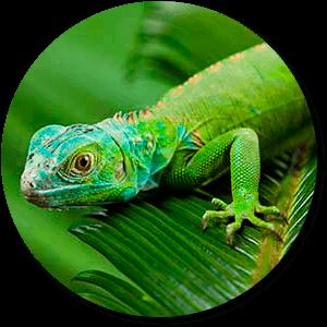 reptiles-r