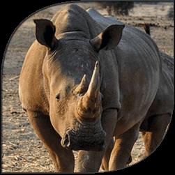 rhino-site