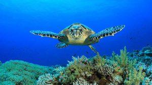 sea-turtle-900-1