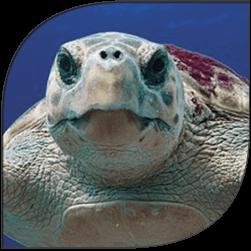 sea-turtle-site