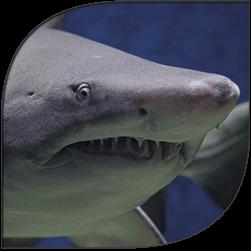shark-site