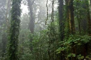 Biomes Information