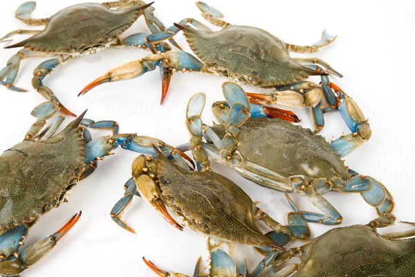 Blue crab locations : Infrared red sauna