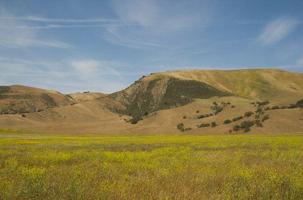 Chaparral Biome Landscape