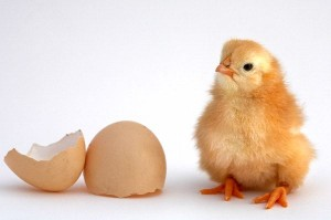 Chick Facts