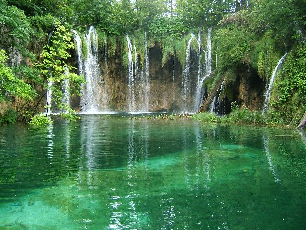 Freshwater Biome Information