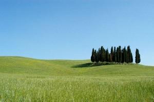 Grassland Biome Information