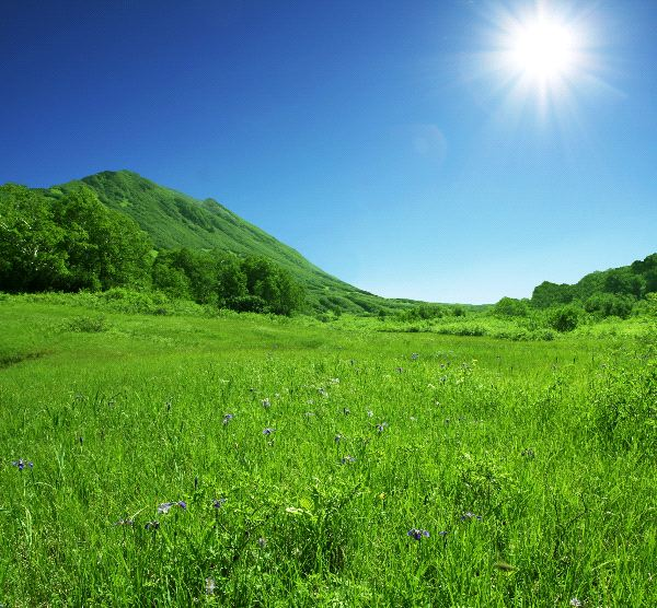 Grassland Biome - Animal Facts and Information