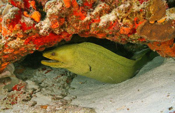Moray Eel Information