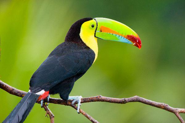 Toucan Information
