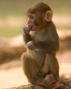 Monkey Infant Facts
