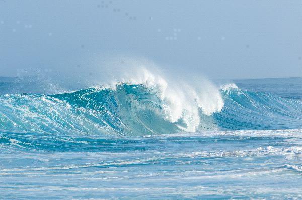 Ocean Biome Information