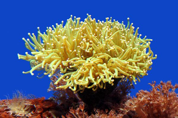 Sea anemone animal facts and information for Fish dream meaning