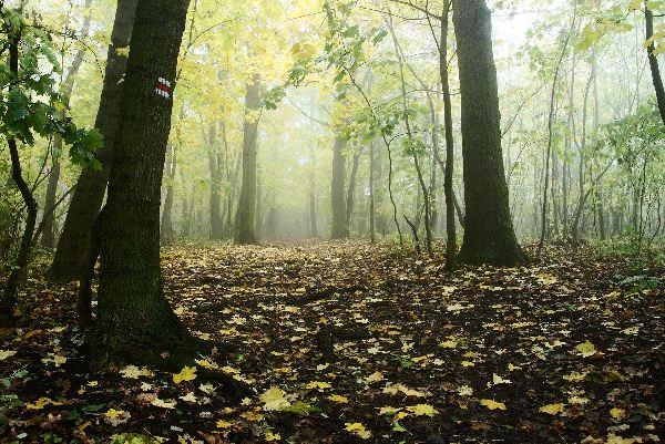 Temperate Deciduous Forest Landscape