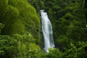 Tropical Rainforest Biome Information