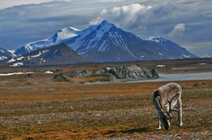 Tundra Biome Information