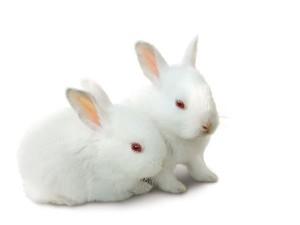Rabbit Bunnies Facts