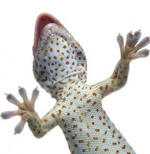 Lizard Information