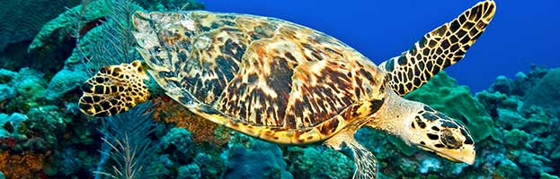 Sea Turtle Anatomy - Animal Facts and Information