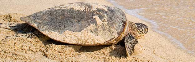 Sea Turtle Reproduction