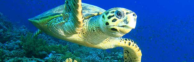 Sea Turtle Species