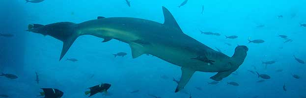 Shark Anatomy Animal Facts And Information