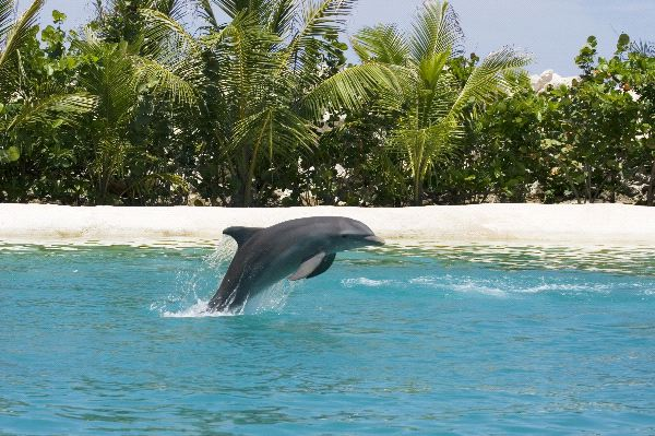 Bottlenose Dolphin Facts and Information