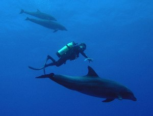 Dolphins Habitat