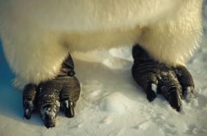 Penguin Anatomy Facts