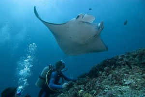 Mantas and Humans