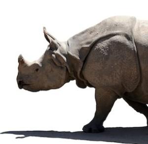 Indian Rhino_Facts