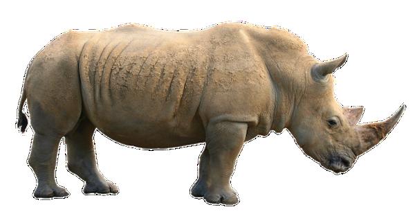 Rhinoceros picture