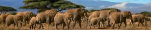 elephant_facts