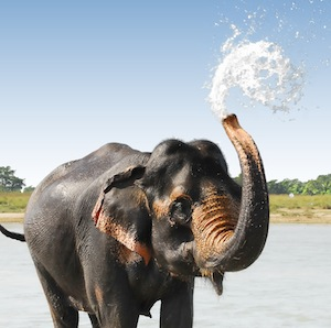 elephant_behavior