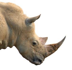 rhino_anatomy_feature