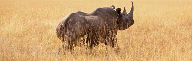 Rhinoceros Habitat